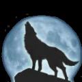 Coyote - zdjęcie